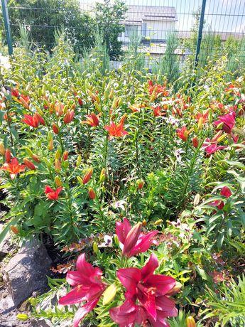 Цветы садовые разных цветов