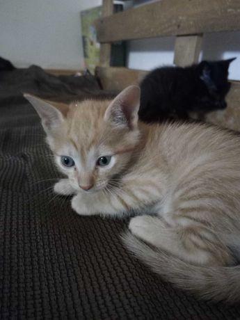 Ninhada gatos para adoção