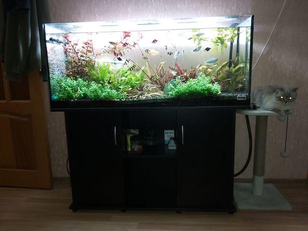 Продам аквариум 240 л, все комплектующие! Компрессор, фильтр и тд