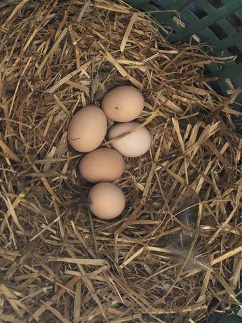 Świeze jajka w wlasnego gospodarstwa dostawa do domu z okolic gm