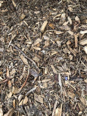 Zrębka z drzew iglastych idealna pod borówke