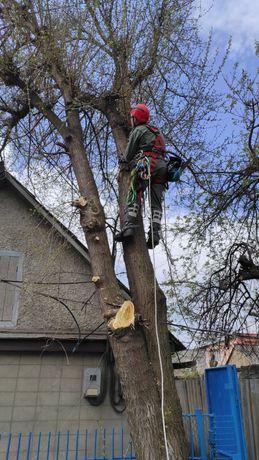 Спил и Обрезка деревьев. Расчистка территории.  Услуги бензопилы