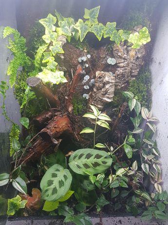 Terrarium 40x40x60 gekon,  felsuma, drzewolazy