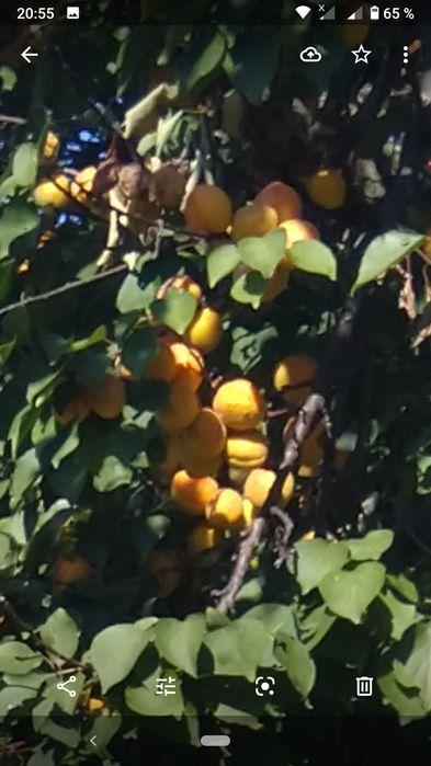 Продам абрикосовое варенье без сахара, 3 л банка 60 грн Новый Кременчуг - изображение 1