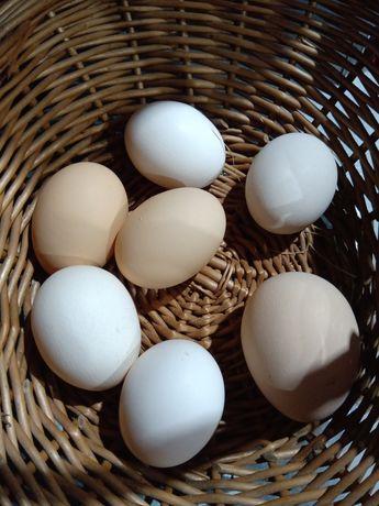 Jajka od kur z wolnego wybiegu eko