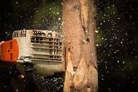 Wycinka drzew , mycie -malowanie dachów ,elewacji. Usługi podnośnikiem