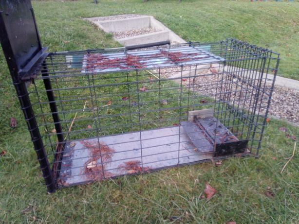 żywołapka pułapka na lisy psy wydry itp