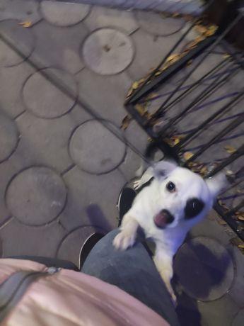 Віддам собачку дівчинку в добрі руки