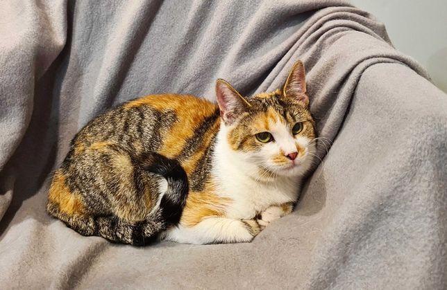 Умная и ласковая кошка Венера (11 месяцев) котик, кошечка, кот, коты