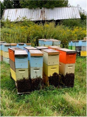 Уже! У нас. Снижение цен! Карника Пчелиные Матки.