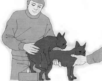 В'язка собак Кам'янець Чернівці Хмельницький вязка