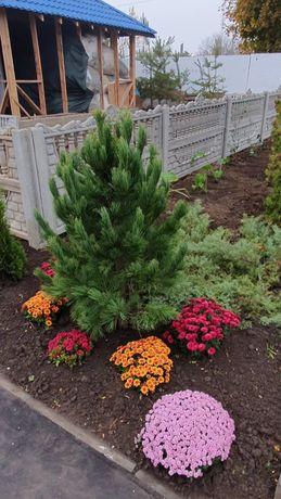 Озеленение благоустройство посадка пересадка деревьев