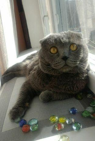 Кот ( жених , вязка)