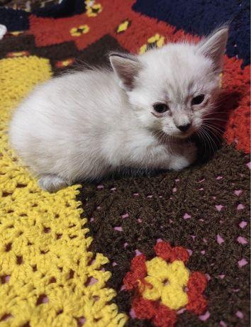 Кіт кішка котеня кошеня кот кошка котенок малин