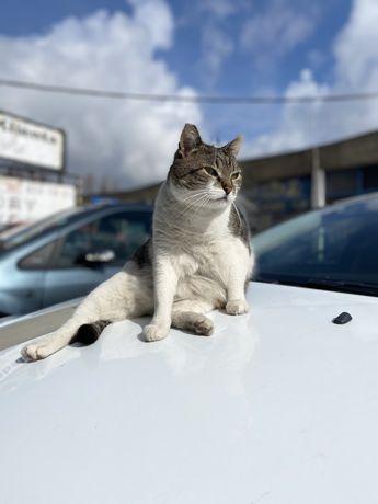 Zaginął kot Warszawa