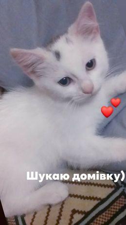 Кошенята білі пухнасті