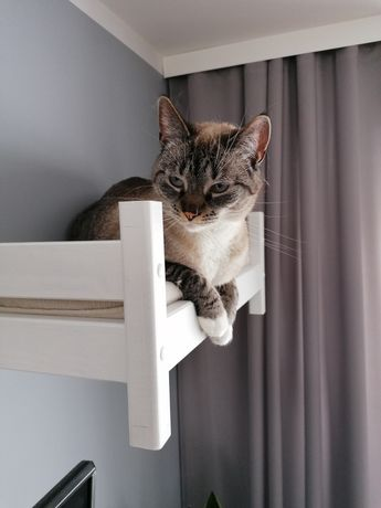 Łóżko/legowisko dla kotów / drapak