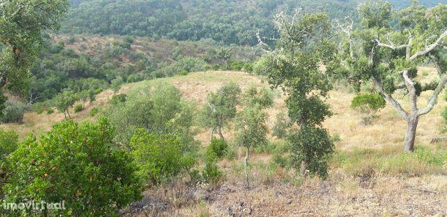 Terreno Rústico  Venda em São Barnabé,Almodôvar