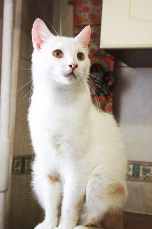 Отдам белого кота ,1 год ,кастрирован