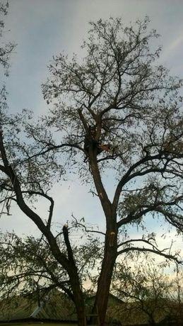 Спил деревьев любой сложнысти недорого фруктовые свывзом.