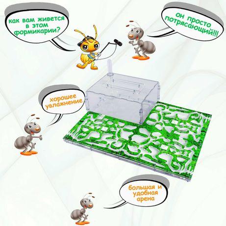Муравьиная ферма  XL (Формикарий) для messor structor (муравей жнец )
