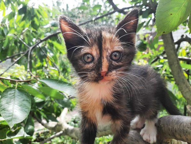 Котята из породы кошек-крысоловов