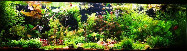 Ryby akwariowe, skalar, płatka, pielęgnica, szczupieńczyk, gurami