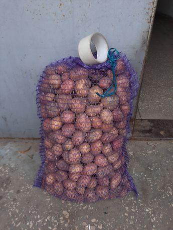 Картофель мелкий для посадки или свиньям картошка