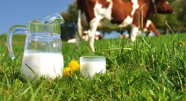Mleko prosto od krowy,ekologiczne super cena