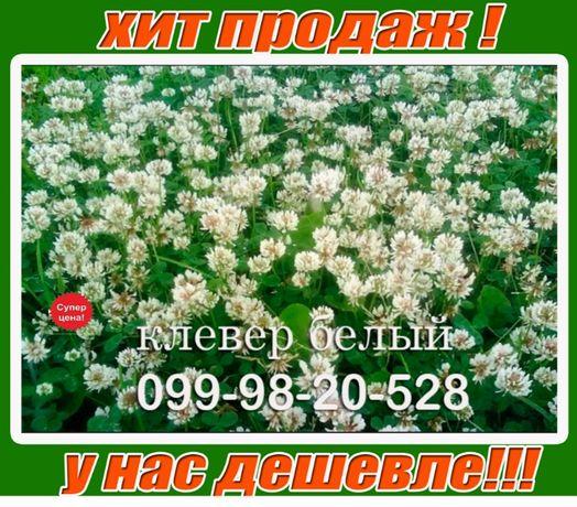 АКЦИЯ! 1кг газон с клевером белым микро 100% ОСЕННЯЯ цена Семена