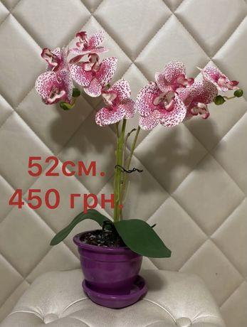Декоративные орхидеи