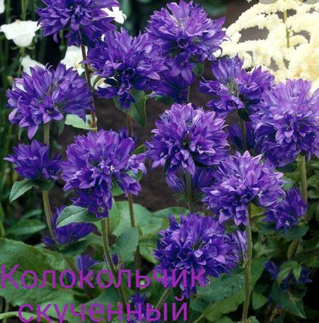 Садові квіти, садовые цветы
