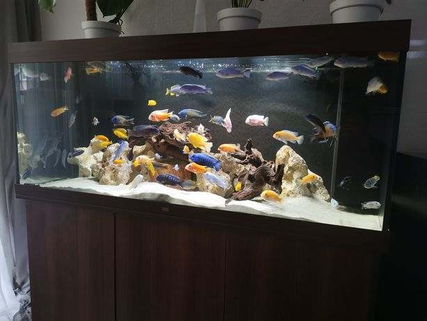 Akwarium Juwel 450l