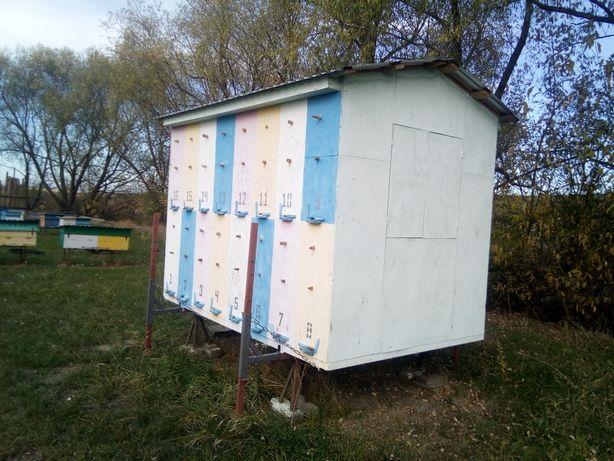 Бджолопавільйон + Бджоли, Павільйон для бджіл