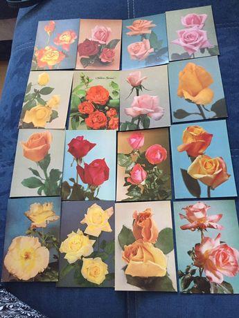 Pocztówki z kwiatami