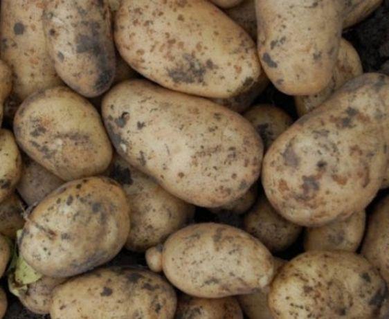 Картопля з власного городу