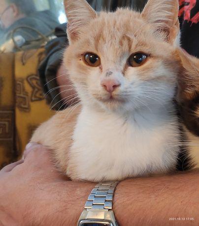 Очень ласковый и нежный  котенок Нежик