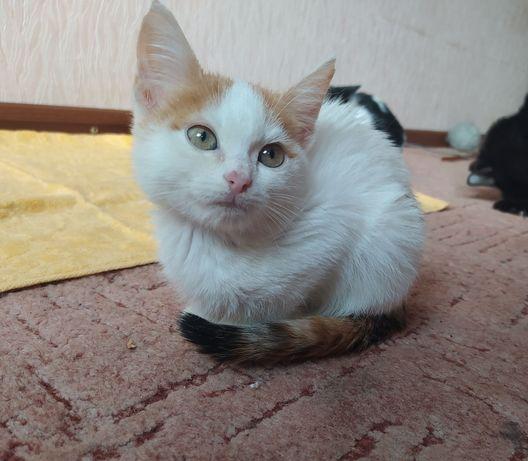 Котята_ отдам котят_ Адель