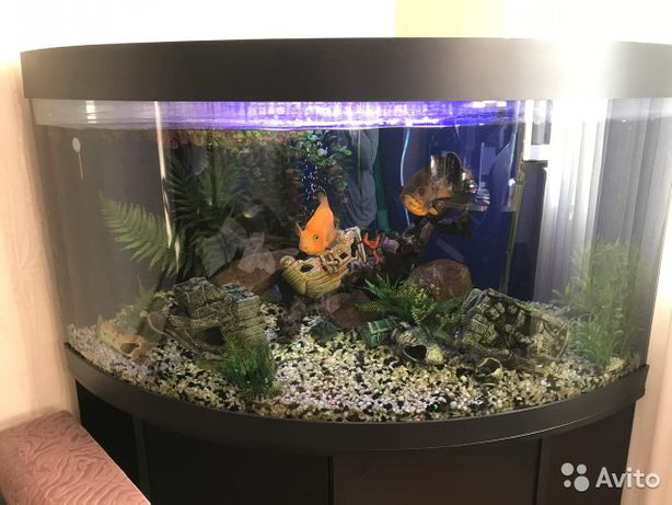Продам аквариум на 350л.