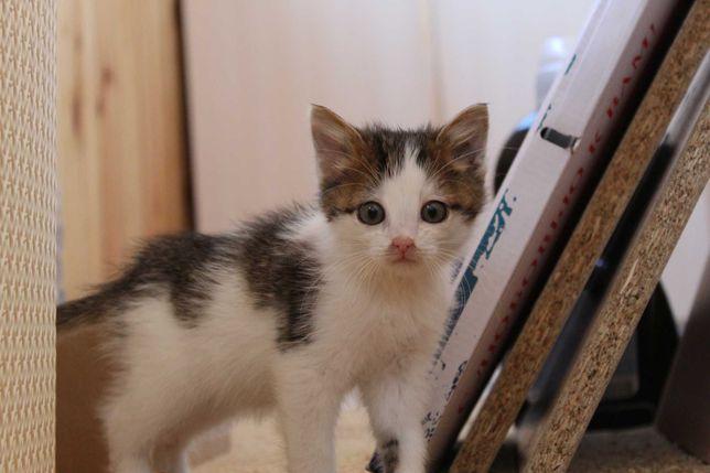 Маленький котенок ищет семью