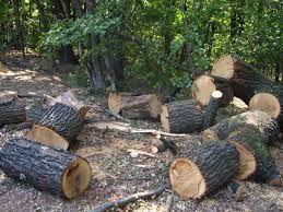 продам дрова( с доставкой)