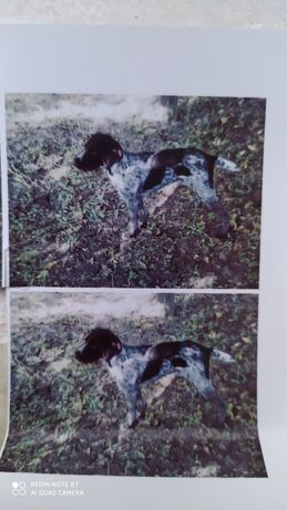 Пропала собака Принц