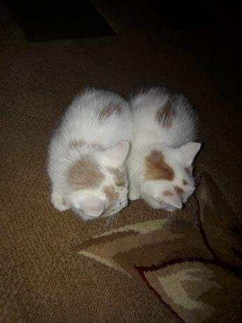 Кіт кошенята коти котики