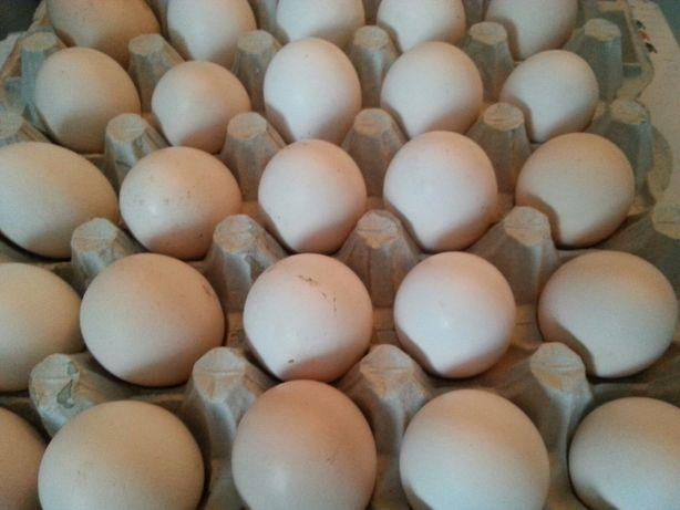 Jajka,jaja świeże