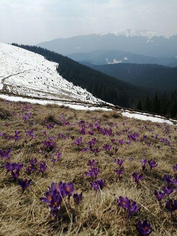 Екскурсия в Карпаты, походы