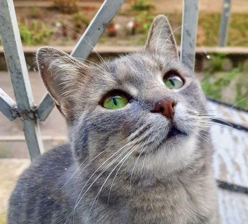 Красавица Муся, самая добрая и ласковая кошка!