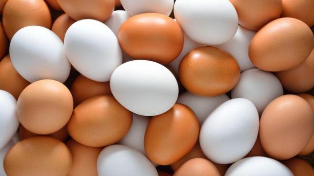 Jajka swojskie z wolnego wybiegu