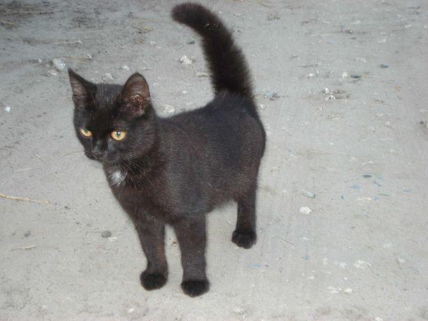 Котенок (кошка) Марго, 6 месяцев, ищет дом и доброго хозяина