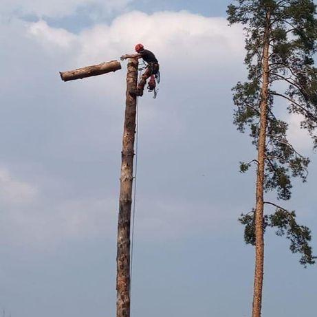 Удаление труднодоступных и аварийных деревьев, Уход за деревьями, Спил