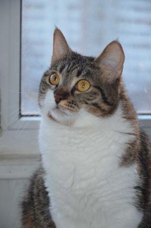 Кошка Ромашка ищет друзей ! (стерилизована)
